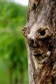 woody- The Woodman