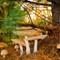 mushroom-0591
