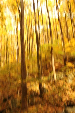 Forest_Impressionist