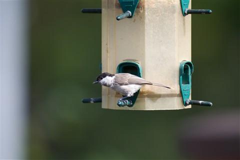 birdie3 sigma120-300 1,4TC at F4,0