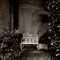 Belton_House_Conservatory