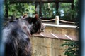 Bear_waiting_closing_time