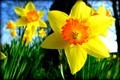BOOM Spring!