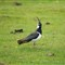Knowsley Safari Park 20120505 0025
