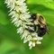 ainsect bee 1032 tyngsboro 2020