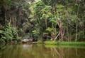 Kuranda Rain Forest- Australia