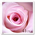 41 Cent Rose Stamp