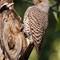 Pine River Park Birds-20160605-0083-Edit
