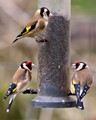Goldfinch Food Bank