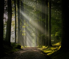 the forest awakens
