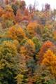 Autumn in Sochi. Russia