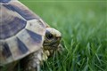 Speedy the Tortoise