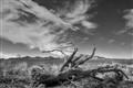 Aridzona Desert...McDowell Mountains
