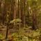 Muir Woods  September 19, 2014  KE  058