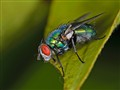 Greenbottle-DSC_0022-080810