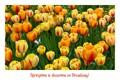 SpringPostcard
