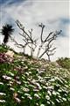 Spring in Limassol