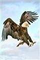 eagle2723