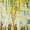 colorado aspen grove 2014-8550