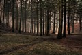 Mystisk skov done