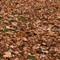 Autumn leaves MG_5985