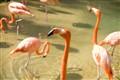 Suspicious Flamingo