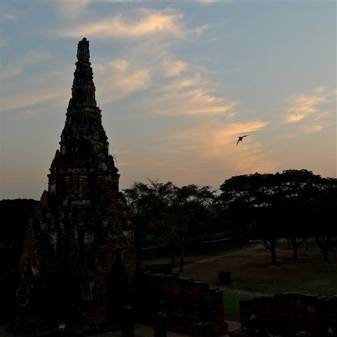 bat flying in the sunset - Wat Chai Wattanaram