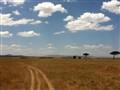 masai mara nataional reserve