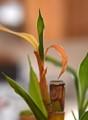 New Bamboo Leaf