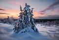 Winter mountain lady