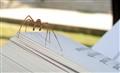 Reading spider