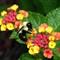P1450811 bumble bee