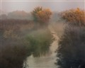 River fog and walnut orchard