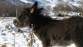 Thistle Eating Donkey