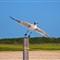 Gull take off