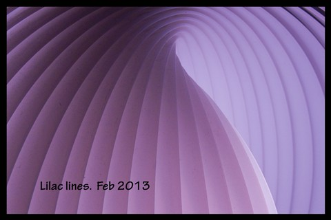 lilac lines