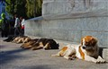 In Punta Arenas they let street dogs lie