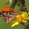 Butterfly01