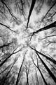 Lifeless forest