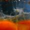 2012 08 23 12-18-24 - IMGP7039b7