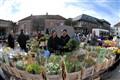 Tulip market