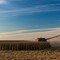 Corn_Harvest_in_the_Prairie_State-1419
