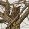 Great Horned Owl _ IMG_6213: