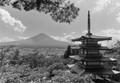 Fuji Trip