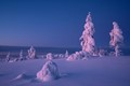 Light of the december Lapland