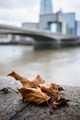 Dead leaves by the Thames
