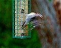 Woodpecker Dissolve
