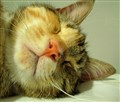 Shhhh sleeping!