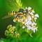 Garden_macros_07_2021_040