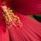 Red Flower 014